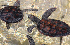 Sea Turtle Project